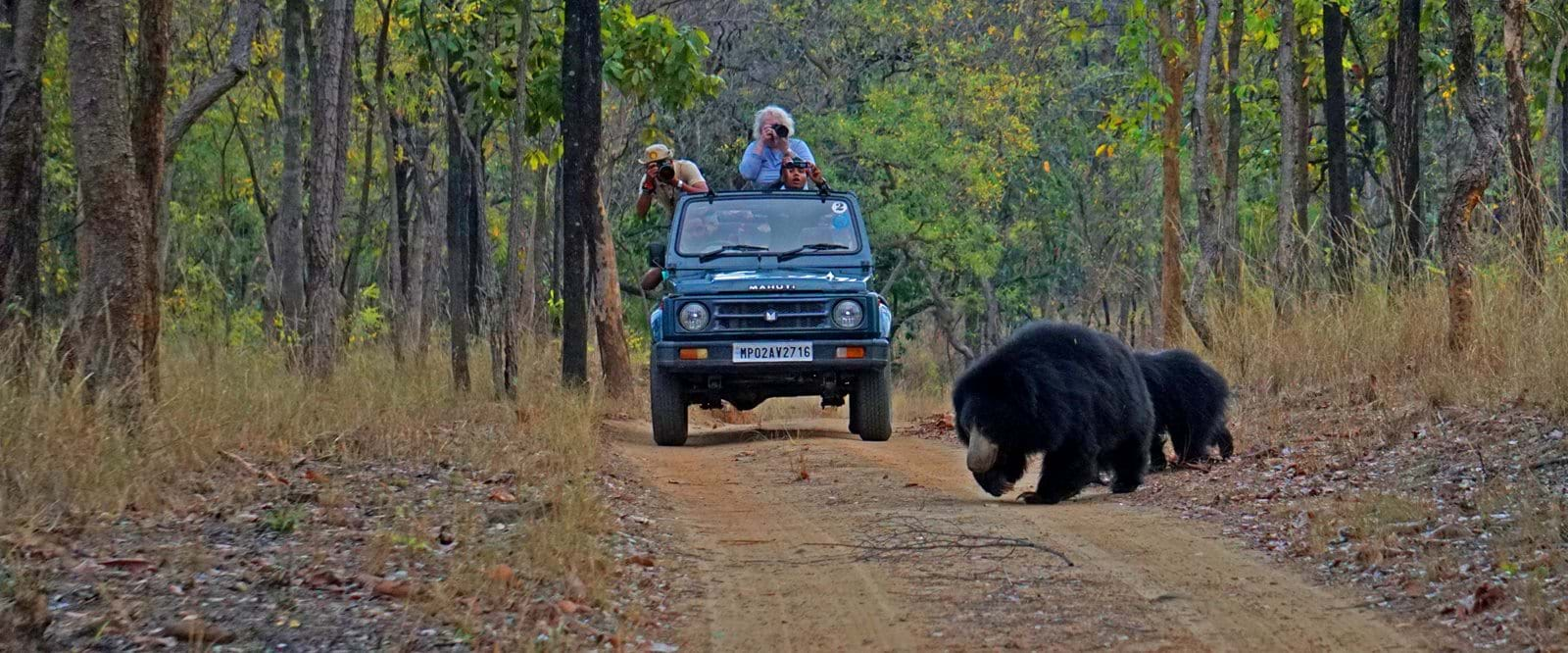 Sloth bear, safari, india, wildlife,