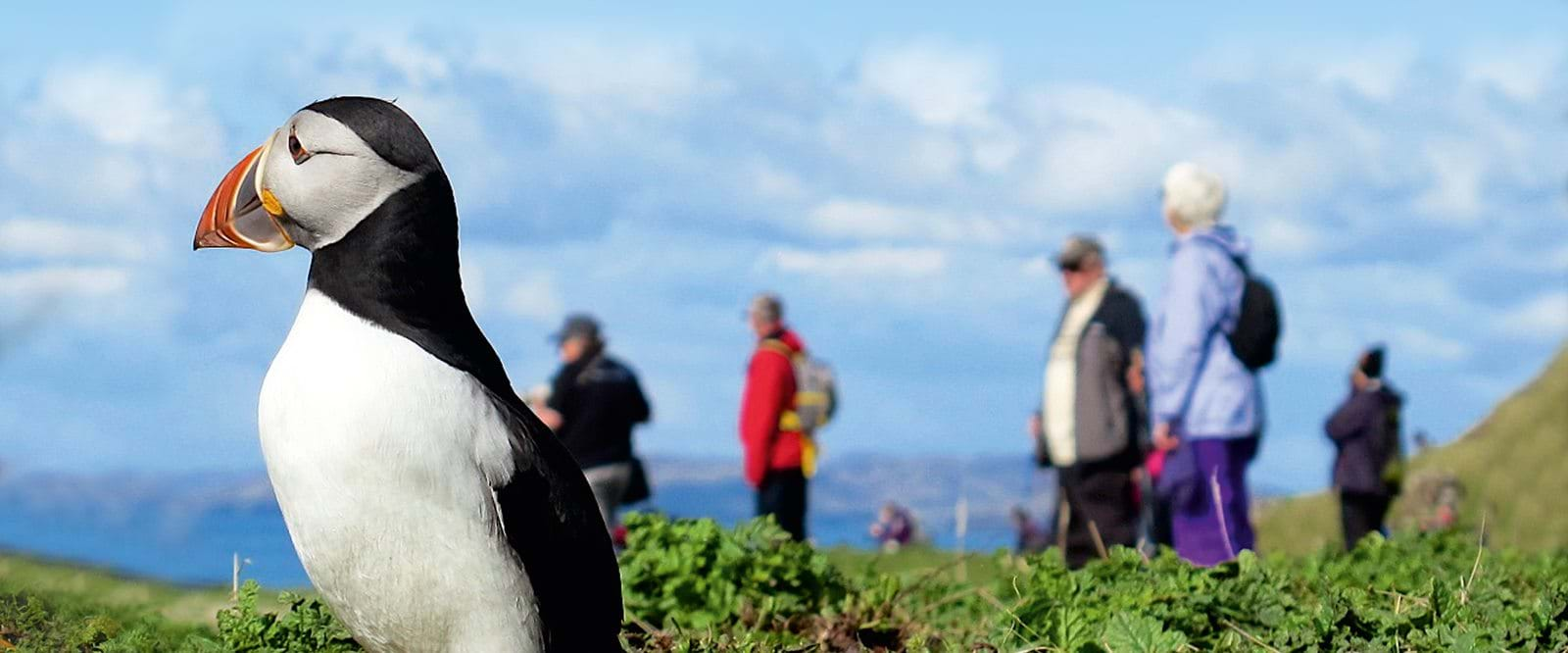 Encounters with Puffins