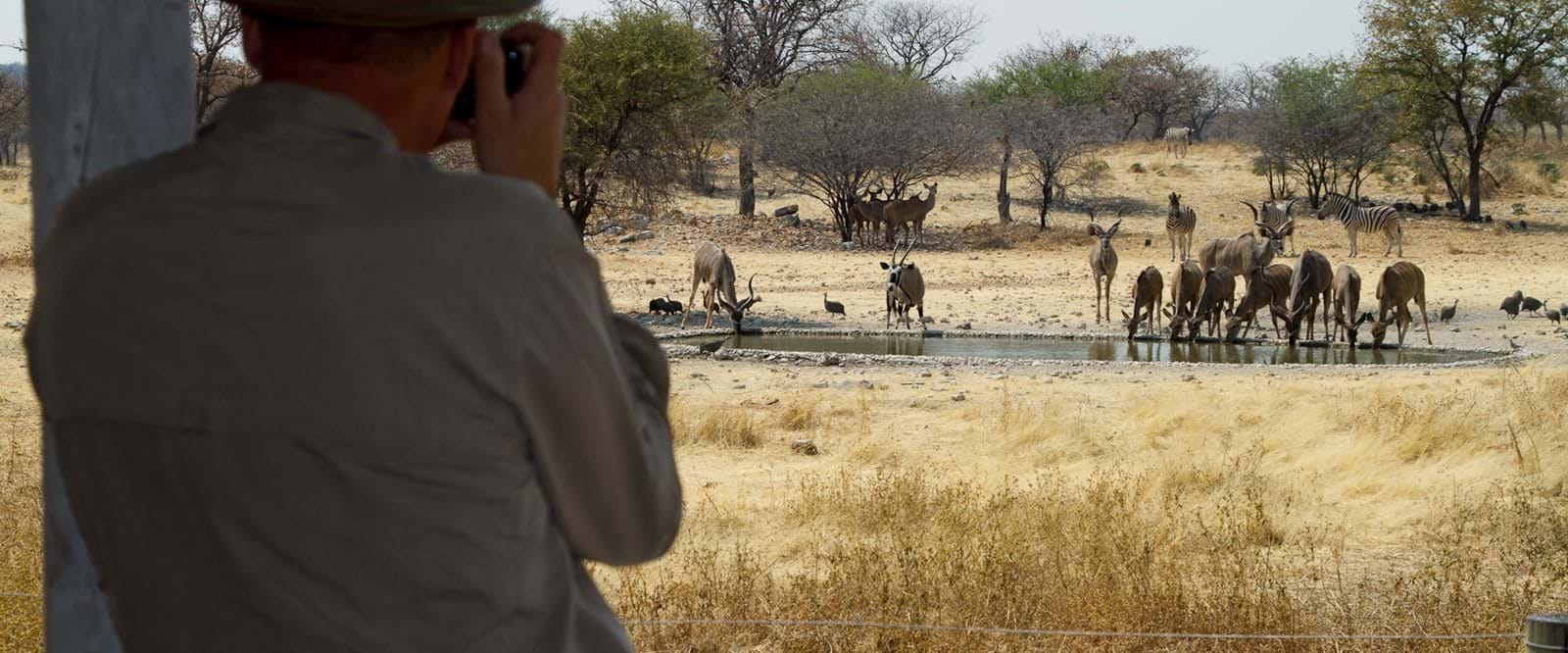 Namibia, Safari, Wildlife, Africa