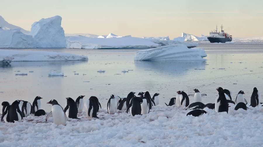 Antactica, penguins, expedition, cruise