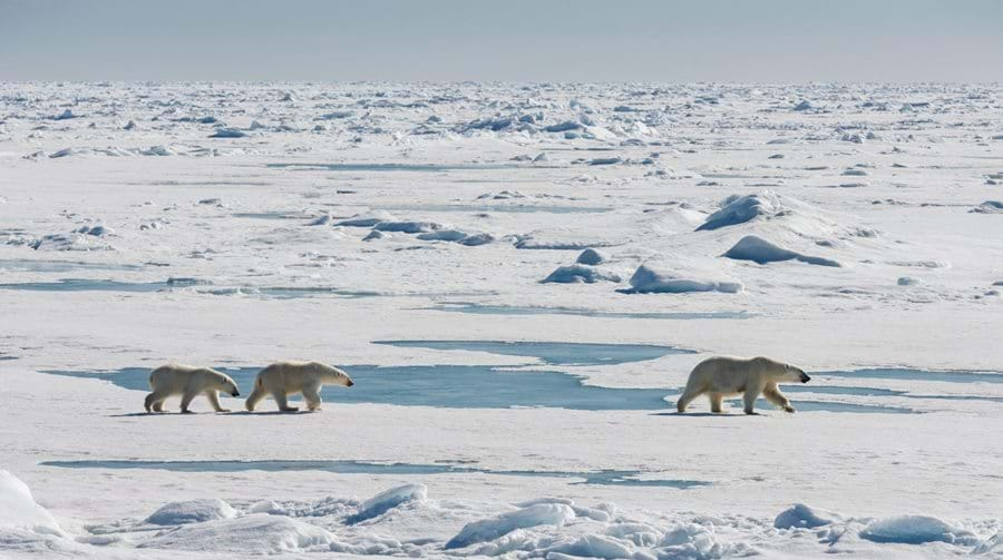 Highlights From 2016 Polarquest