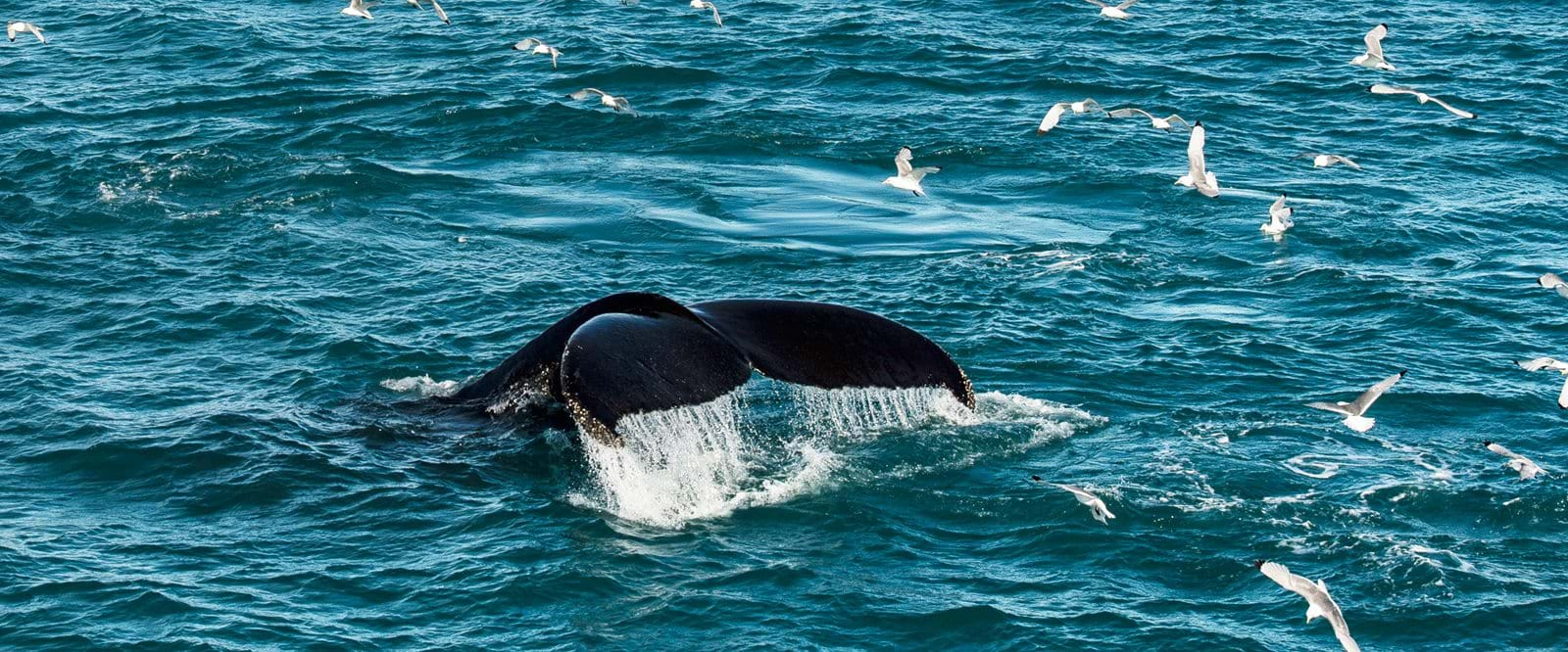 whale, Svalbard, Arctic cruise, expedition cruise